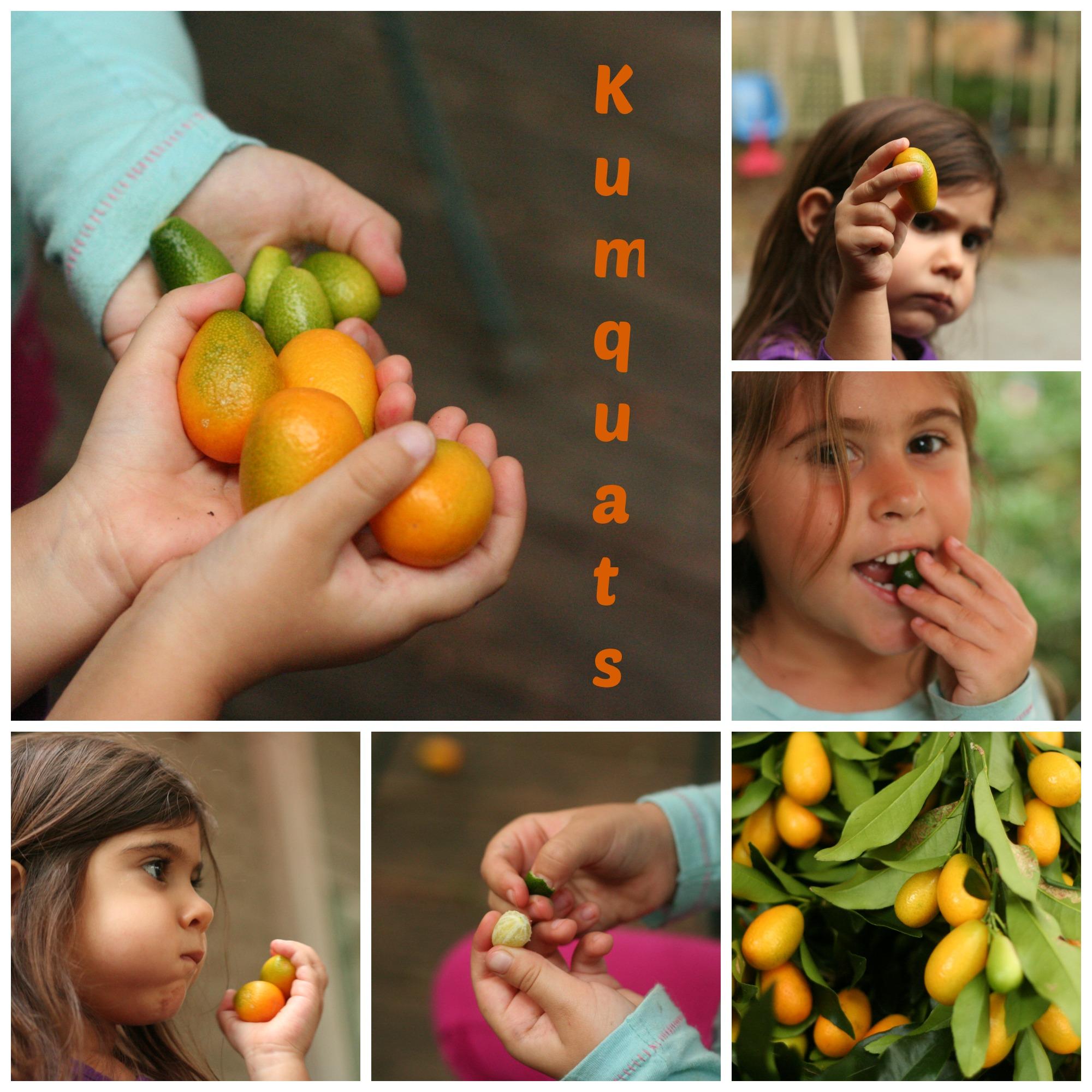 kumquatscollage